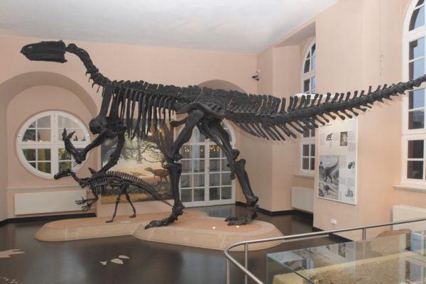iguanodonn-naturkundemuseum-kasselA5B5C0D1-1DB9-7A06-BA7C-B83EBD8DCB1D.jpg